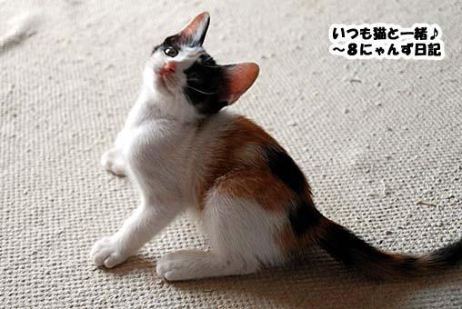 okaka.jpg